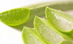 La pulpa y el jugo del Aloe vera