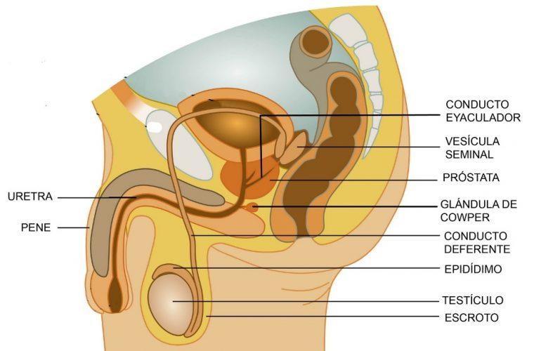 significado de hpb prostata